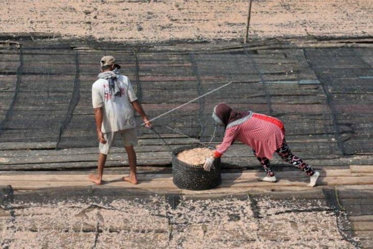 Udang rebon nelayan Kuala Tungkal