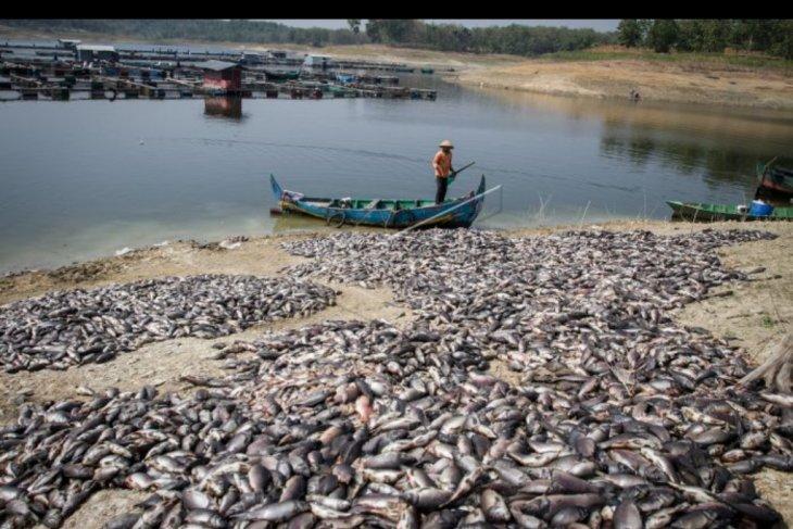 Fenomena ribuan ikan mati di waduk Kedung Ombo