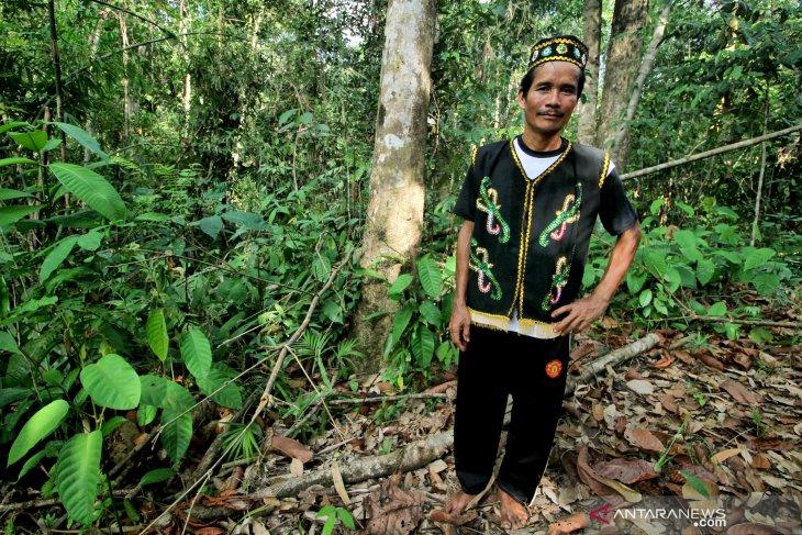 Hutan dan Kehidupan Masyarakat Adat Seberuang