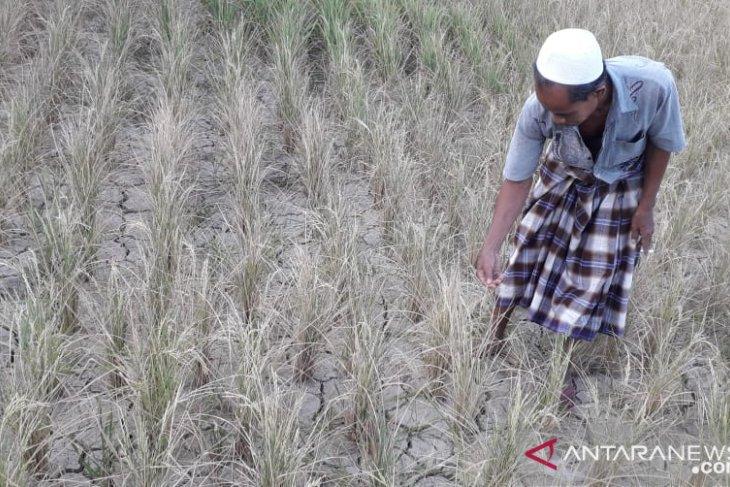 Kekeringan sudah terjadi di beberapa wilayah Sukabumi