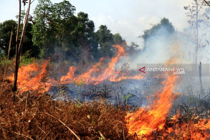 Fire razes 50 hectares of peatland area in Aceh