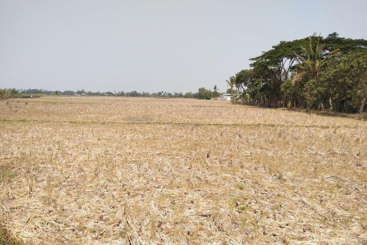 Waduh, ribuan hektare sawah di Karawang kekeringan