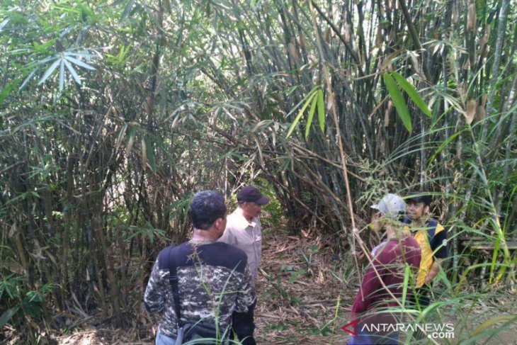Protected forest team monitors Marajai forest