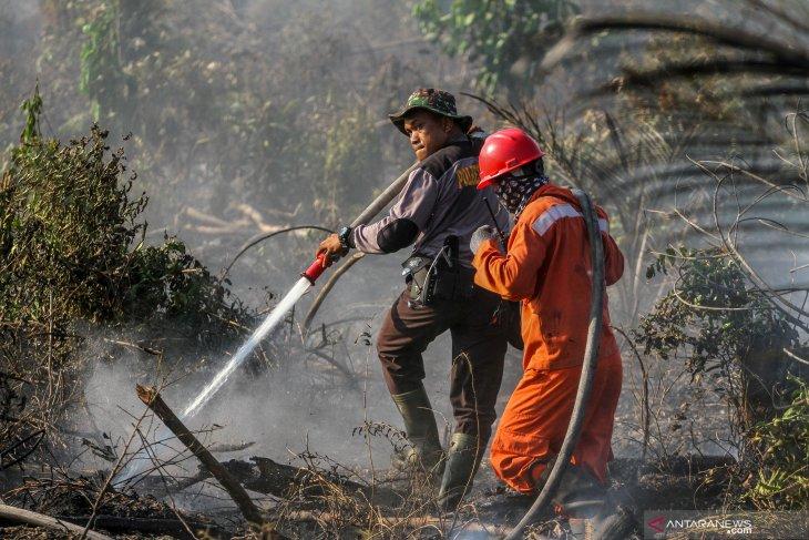 Polisi tangkap pembakar  lahan gambut untuk kebun cabai