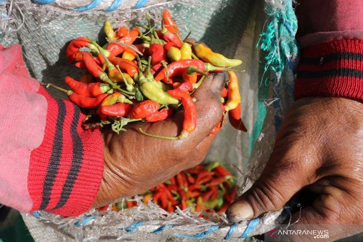 Warga keluhkan hargai cabai Rp100.000/kg