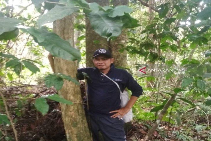 Pohon kopi diperkirakan berusia ratusan tahun ditemukan di Desa Pagur
