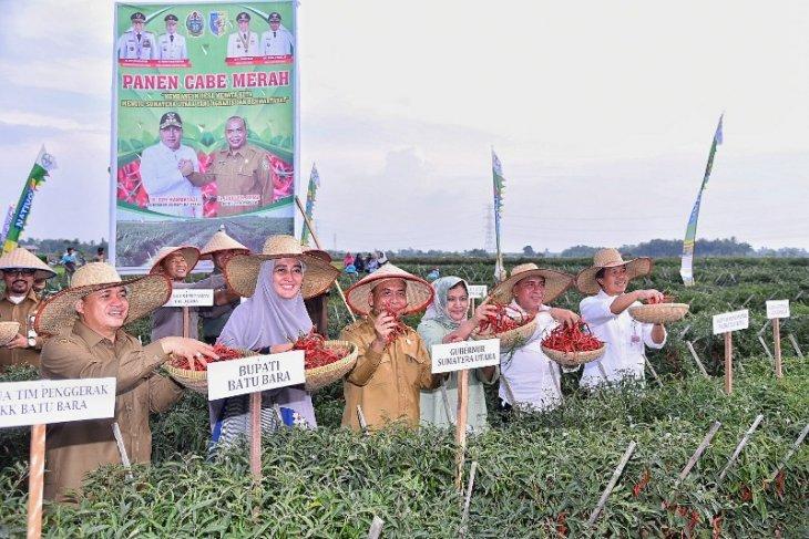 Batubara jadi sentra produsen cabai merah di Sumut