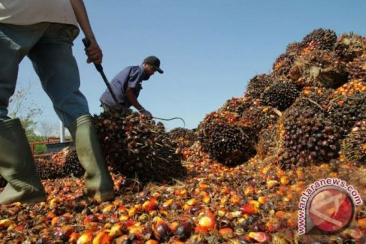 Indonesia posted higher CPO exports in May: GAPKI