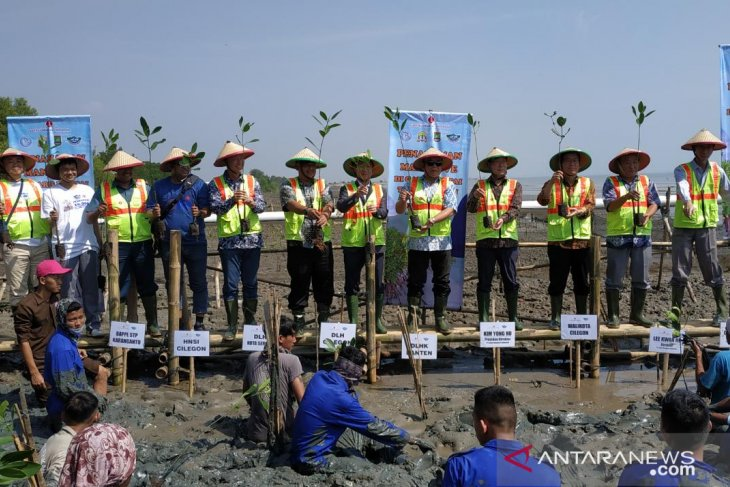 Miris, kerusakan hutan mangrove capai 60 persen