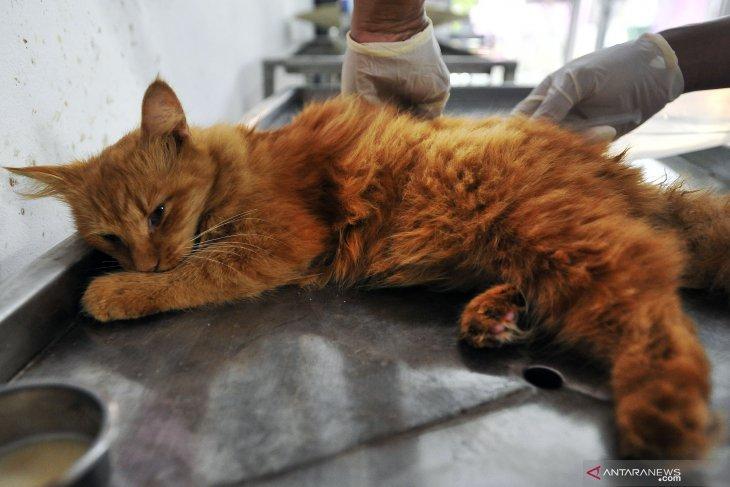 Stop making cat eater video viral: JAAN