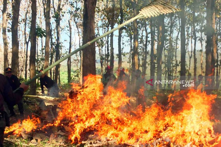 10 desa di Bengkayang rawan kebakaran