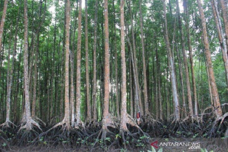 Pemko: Hutan mangrove Langsa terlengkap di Asia Tenggara