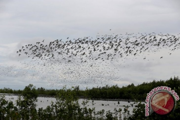 Siberia birds will no longer migrate to Sembilang Park: Walhi