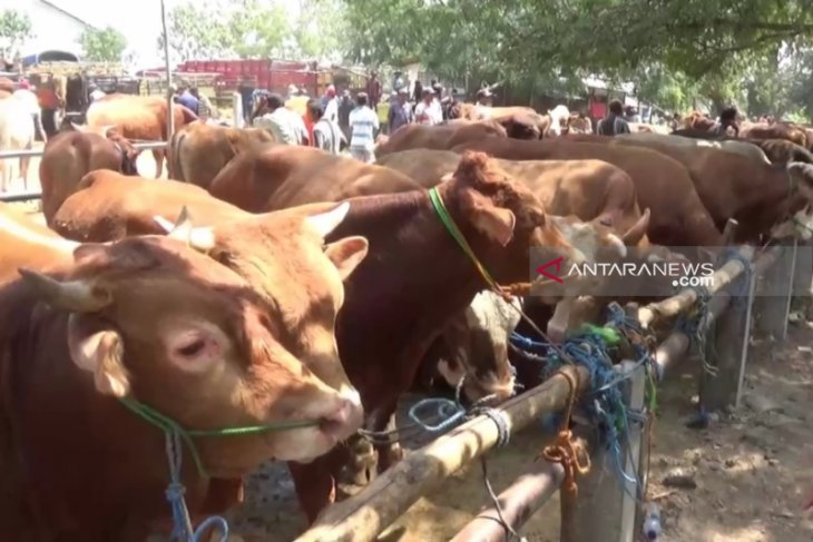 Legislator calls for tight inspection of sacrificial animals