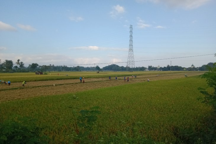 Mataram builds dozens of shallow wells to tackle drought