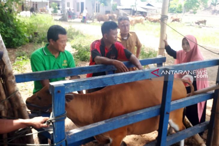 Disnakkeswan targetkan penurunan gangguan reproduksi ternak sapi hingga nol persen