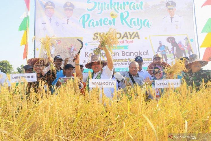 Wali Kota panen padi di Bangkal