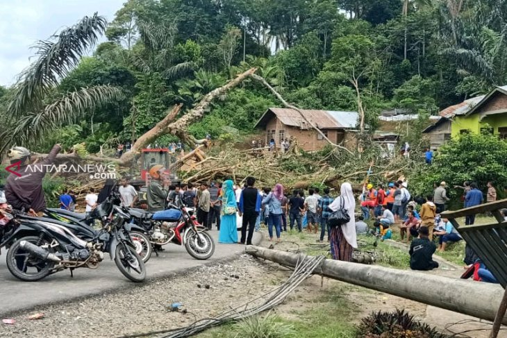 Pohon tumbang sering jadi penyebab listrik padam
