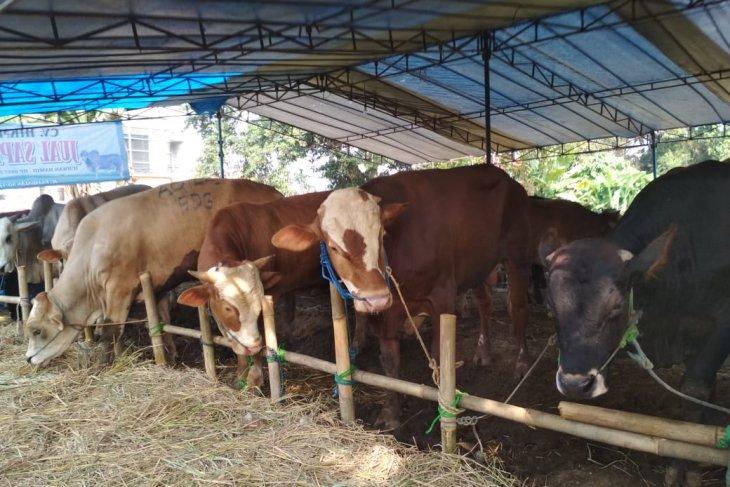 Jelang Idul Adha harga sapi di Sukabumi relatif masih normal
