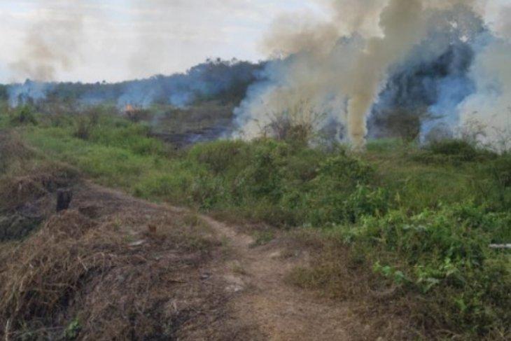 Dua titik kebakaran hutan di Tabalong terpantau satelit