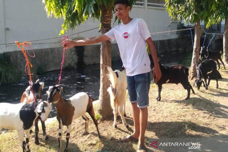 Jelang Idul Adha, pedagang hewan kurban menjamur di Lhokseumawe