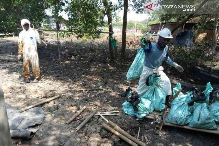 Waduh, ratusan ribu bakau Bekasi terancam mati akibat tumpahan minyak