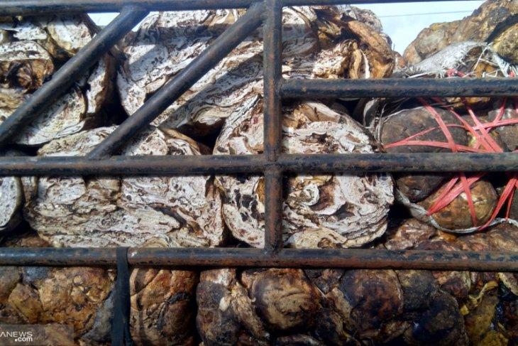 Kemenperin gandeng pemda dan BI pacu hilirisasi karet di Jambi