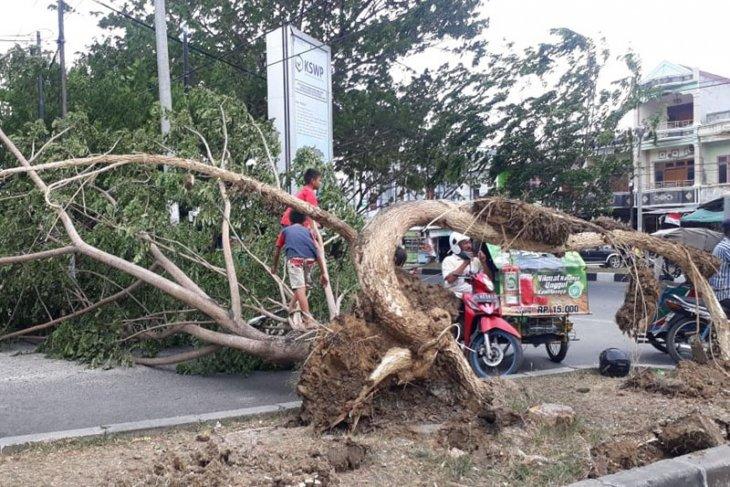 Angin kencang tumbangkan pohon Banda Aceh