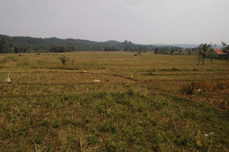 2.760 hektare tanaman padi di Lebak kekeringan, terancam gagal panen