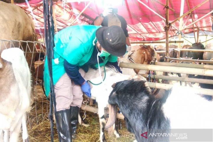 Ditemukan 547 hewan tidak layak kurban di Jakarta