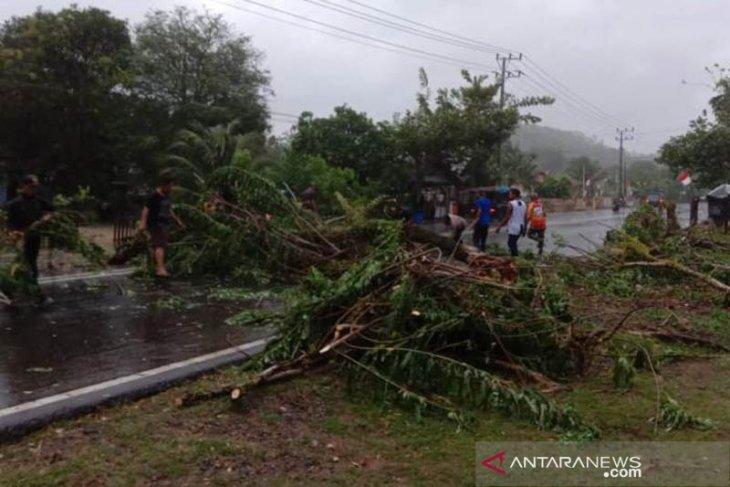 Pohon cemara tumbang di Lhoknga akibat angin kencang