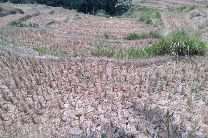 Atasi kekeringan dengan pompanisasi terkendala sumber air selama musim kemarau