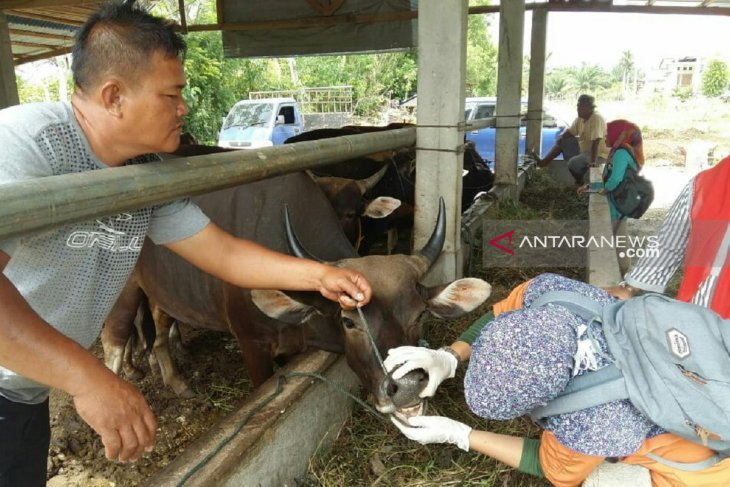 Mukomuko temukan hewan kurban terkena gejala jembrana