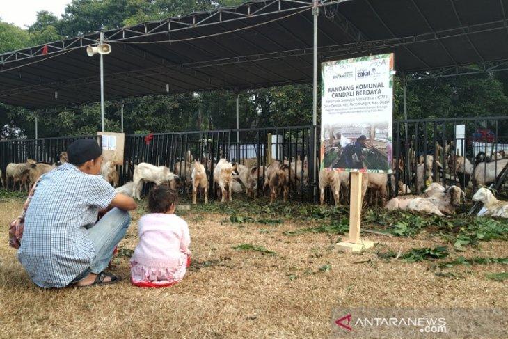 Al Azhar Mosque to distribute  sacrifice meat to Sumatra, Papua