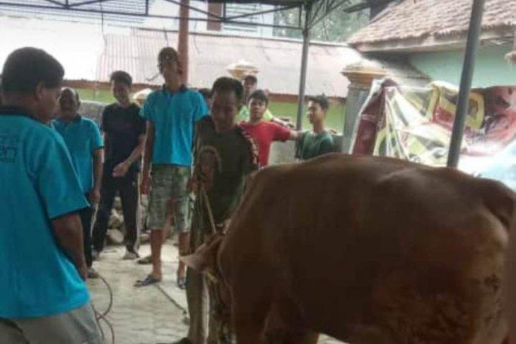 Suasana pemotongan hewan kurban di Pal Lima (video)