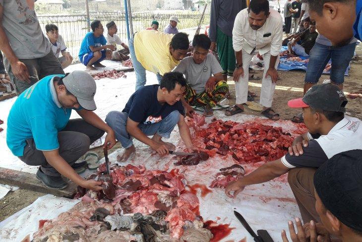 Temukan cacing hati di sejumlah daging hewan kurban, Distan Banten langsung lakukan tindakan