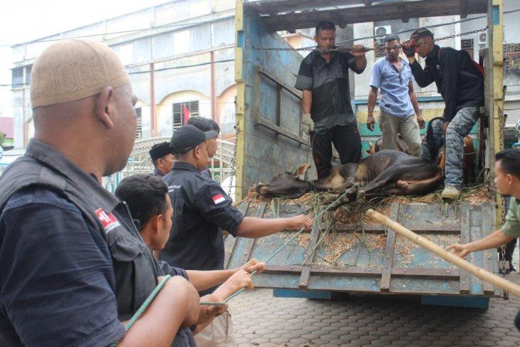 ACT Aceh distribusikan 1.000 ekor lebih hewan  kurban