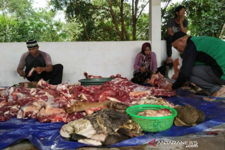 Pemkab Bangka Selatan kurban tiga ekor sapi