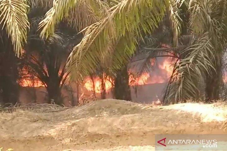 Aktifitas ilegal driling picu kebakaran di kawasan tahura