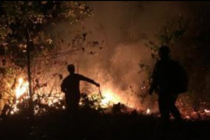 Wildfires ravage 1,500 hectares of land in Bintan District: Authority