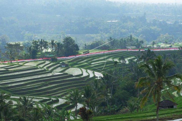 Pembentangan merah putih terpanjang di Jatiluwih