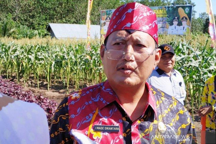 Ribuan hektare padi  gagal panen