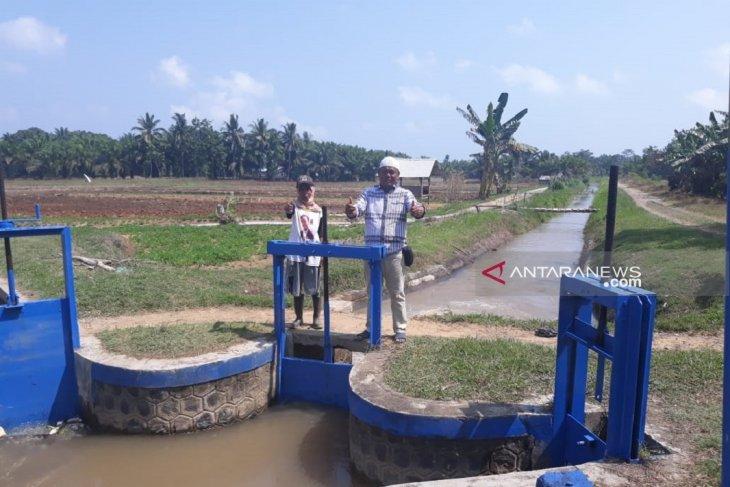 Air irigasi di Mukomuko berkurang akibat kemarau