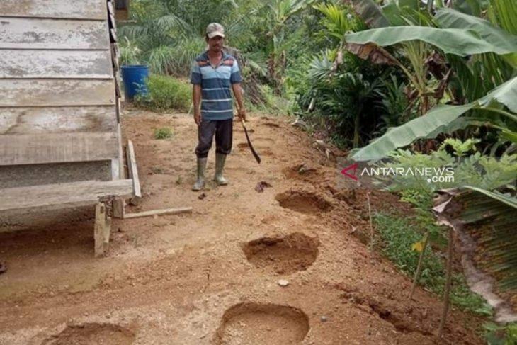 Kawanan gajah ngamuk, puluhan warga terpaksa mengungsi