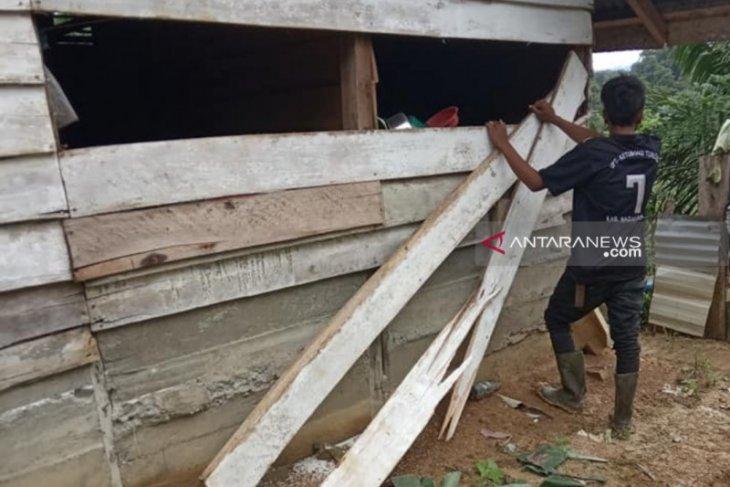 Gajah rusak satu rumah warga translok di Nagan Raya