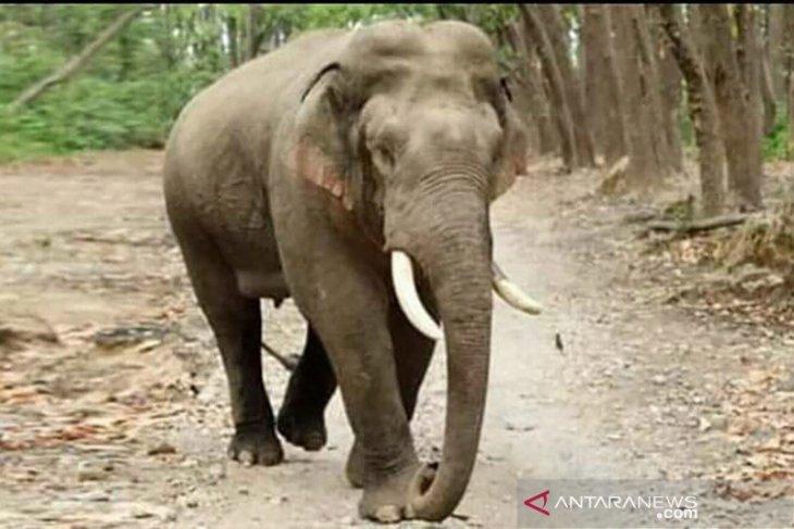 Forest fires destroy parts of Sumatran elephant habitats
