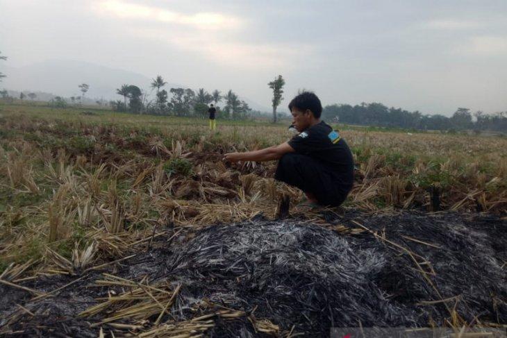 Ribuan hektare sawah di Lebak tertunda tanam akibat terhalang adat