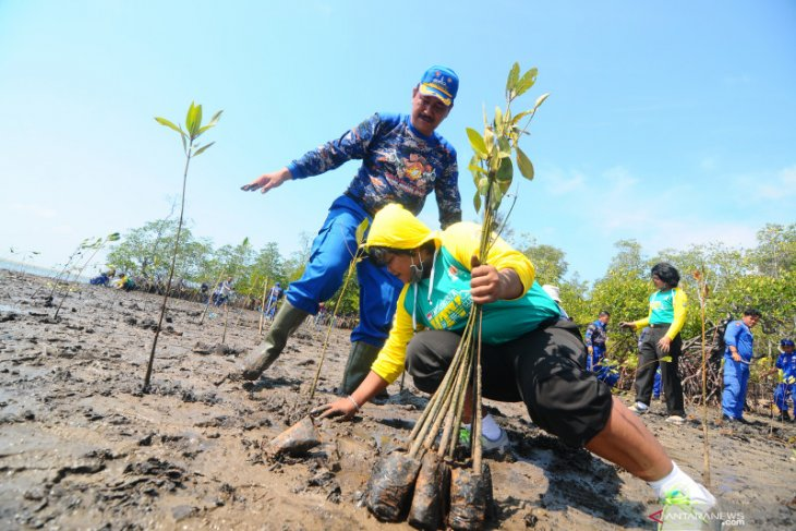Some 70 percent damage caused to South Kalimantan's mangrove forest