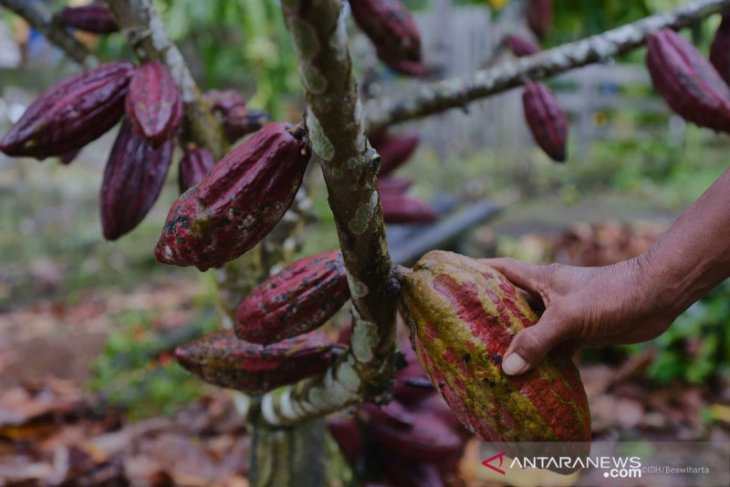 Cocoa shares US$1.13 billion to foreign exchange