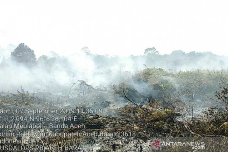 Wildfire annihilates West Aceh's 1.5-ha peatland